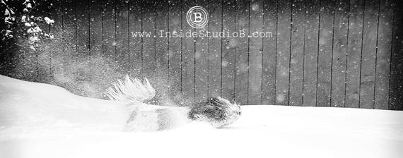 Dog Having Fun in Snow